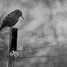 Alone in the Storm by by Marvil LaCroix