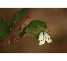 White Butterfly at the Kirk Photographic Print
