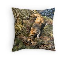 Come out come out wherever you are! Throw Pillow
