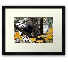 Who is Checking Who Out? Framed Print