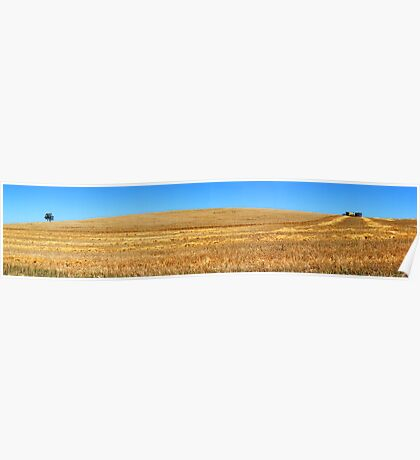 Harvest Pano Poster