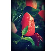 Chilli or Two Photographic Print