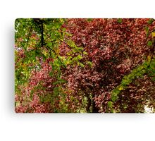 Wooded Beauty Canvas Print