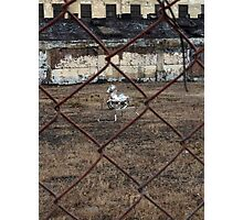 The Silver Hobby Horse - 4 Photographic Print