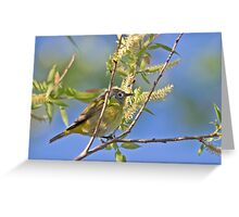 Spring Warbler Greeting Card