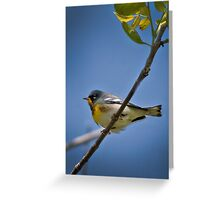 Parula Warbler Greeting Card