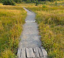 Path Along Mount Rainier by The Accidental Farmers