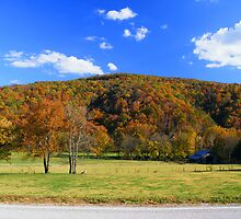 Fall Colors and Barn at Boxley Valley, Arkansas by DonCondley