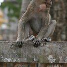 Monkey Mountain by randomness