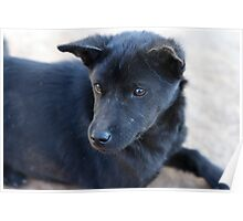 Lahu Mountain Puppy Poster