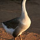 Lahu Mountains Goose by randomness