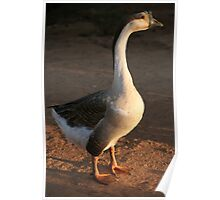 Lahu Mountains Goose Poster