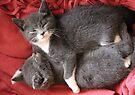 Kittens by Anne Staub