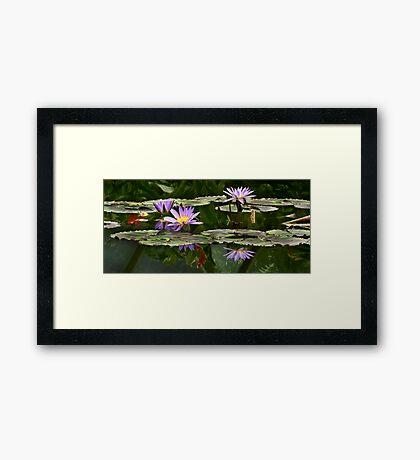 Water Lilly Garden Framed Print