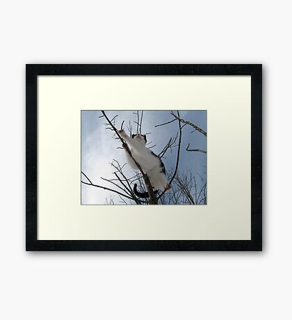 I dare one to land on me Framed Print