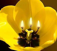 The three Lights of Life by JonnisArt