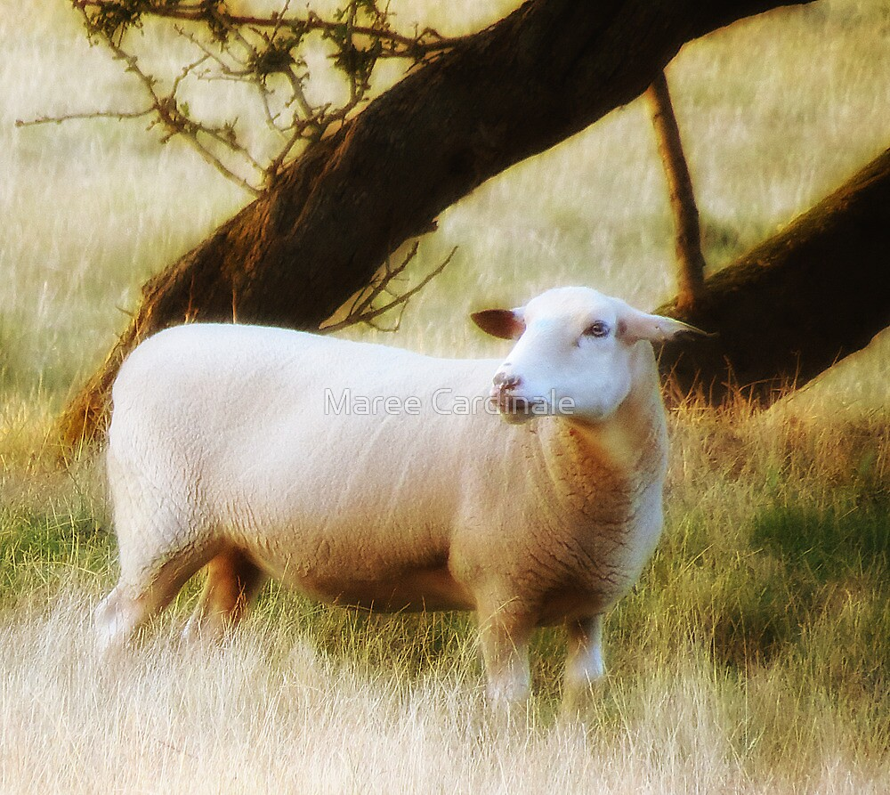 The Sheep by Maree Cardinale