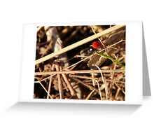 Just a fly in fancy pyjamas. Greeting Card