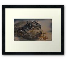 Uromastyx Lizard Framed Print