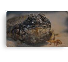 Uromastyx Lizard Canvas Print