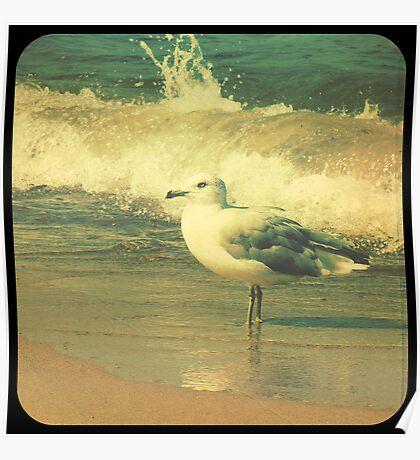 Lake Michigan Seagull Poster