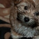 Lucy by Bromoson Photography