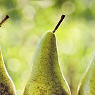 three pears by Michelle McMahon