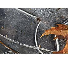 Ice Lines and Leaf Photographic Print