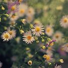 Woodland Daisies by Karen E Camilleri
