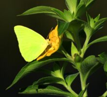 Yellow Butterfly on a Flower Sticker