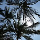 Look Up Through The Palms, Kenya, Africa by Anita  Fletcher