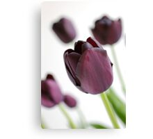 Purple Tulips Canvas Print