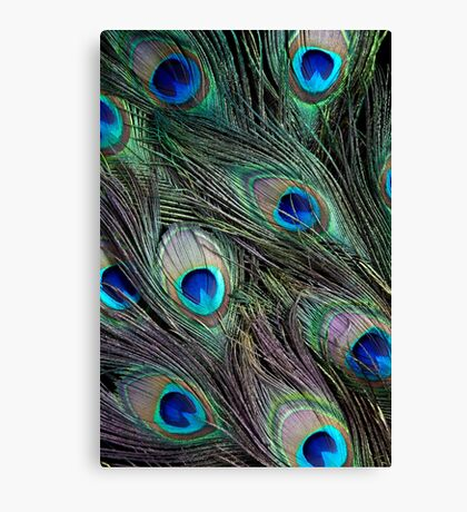Peacock feathers detail Canvas Print