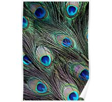 Peacock feathers detail Poster