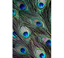 Peacock feathers detail Photographic Print