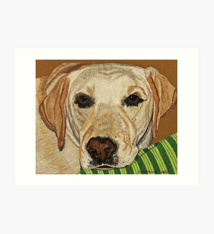 Labrador Retriever - Yellow Art Print