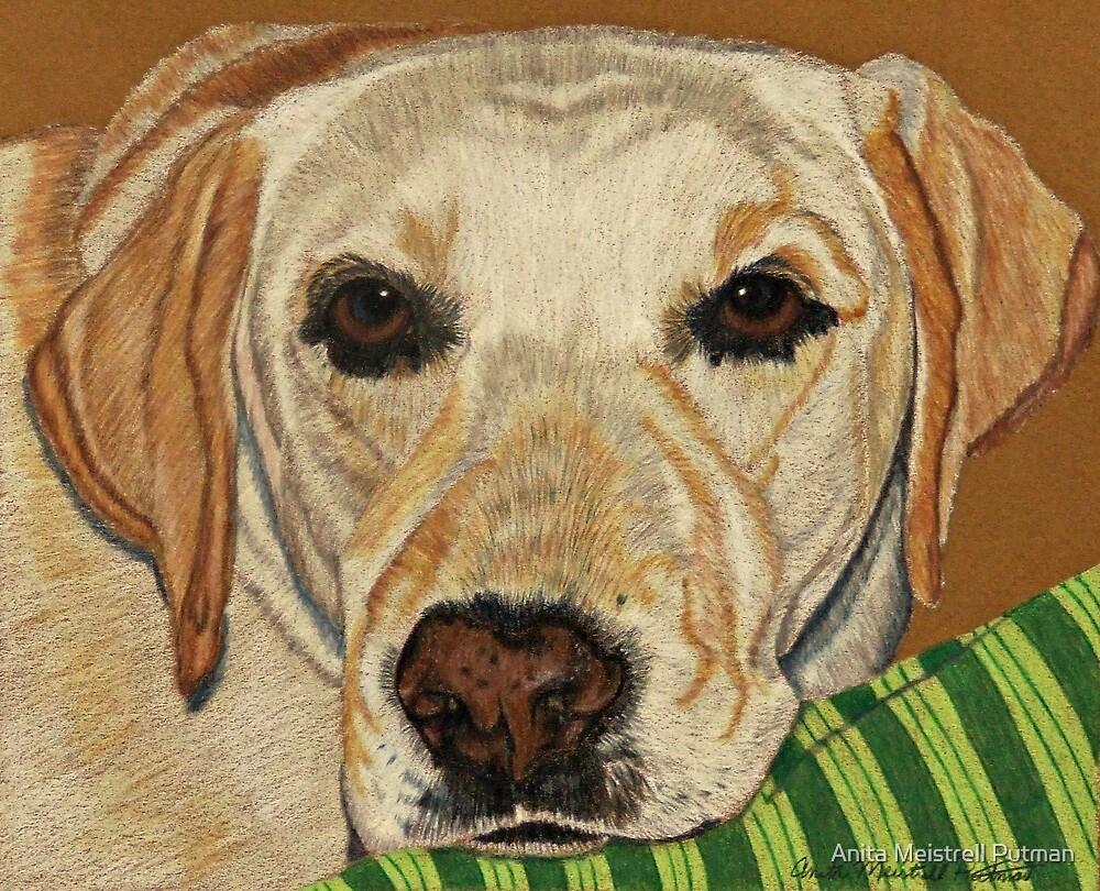 Labrador Retriever - Yellow by Anita Meistrell Putman