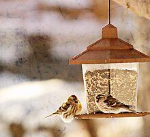 Winter Bird (2) by lilyinthewater