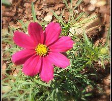 Flower by Raluca Polea