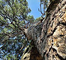 Up A Tree by Carolyn  Fletcher