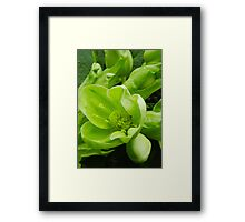 Come and get me! Framed Print