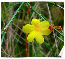 Little Yellow Flower Poster