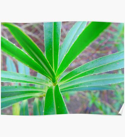 Green Leaf Poster