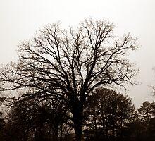 Desolation by Sean Paulson