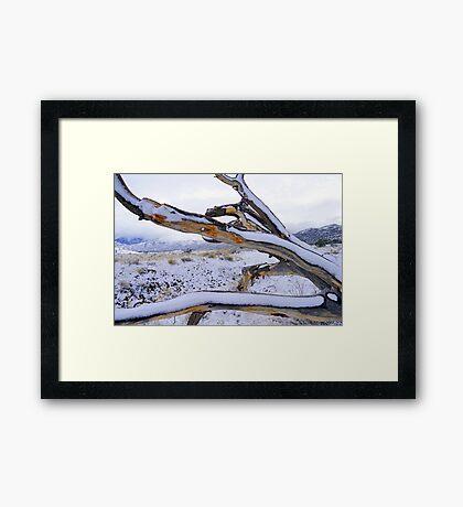 Cold Beauty Framed Print