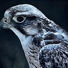 Lanner Falcon by Dean Messenger