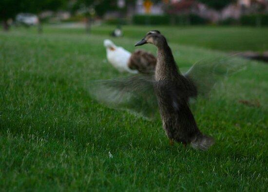 Batty Ducky by charityhunt