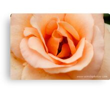 Apricot Nectar Canvas Print