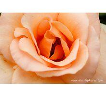 Apricot Nectar Photographic Print