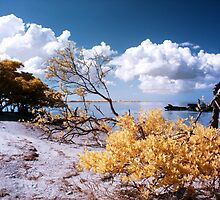 Old Tampa Bay (View #5) by PomeroyImages